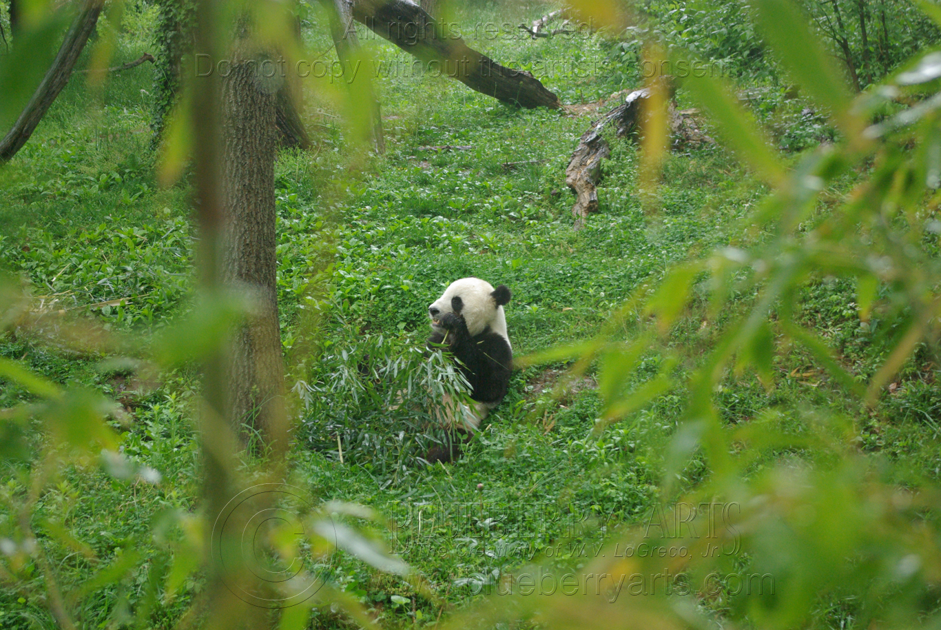 Bamboo Lunch
