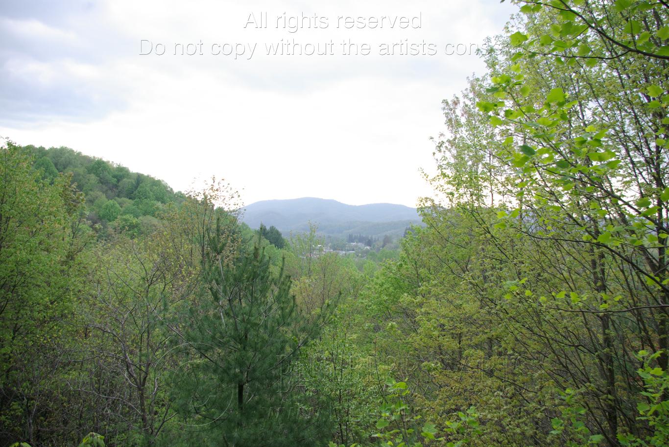 Mann's View
