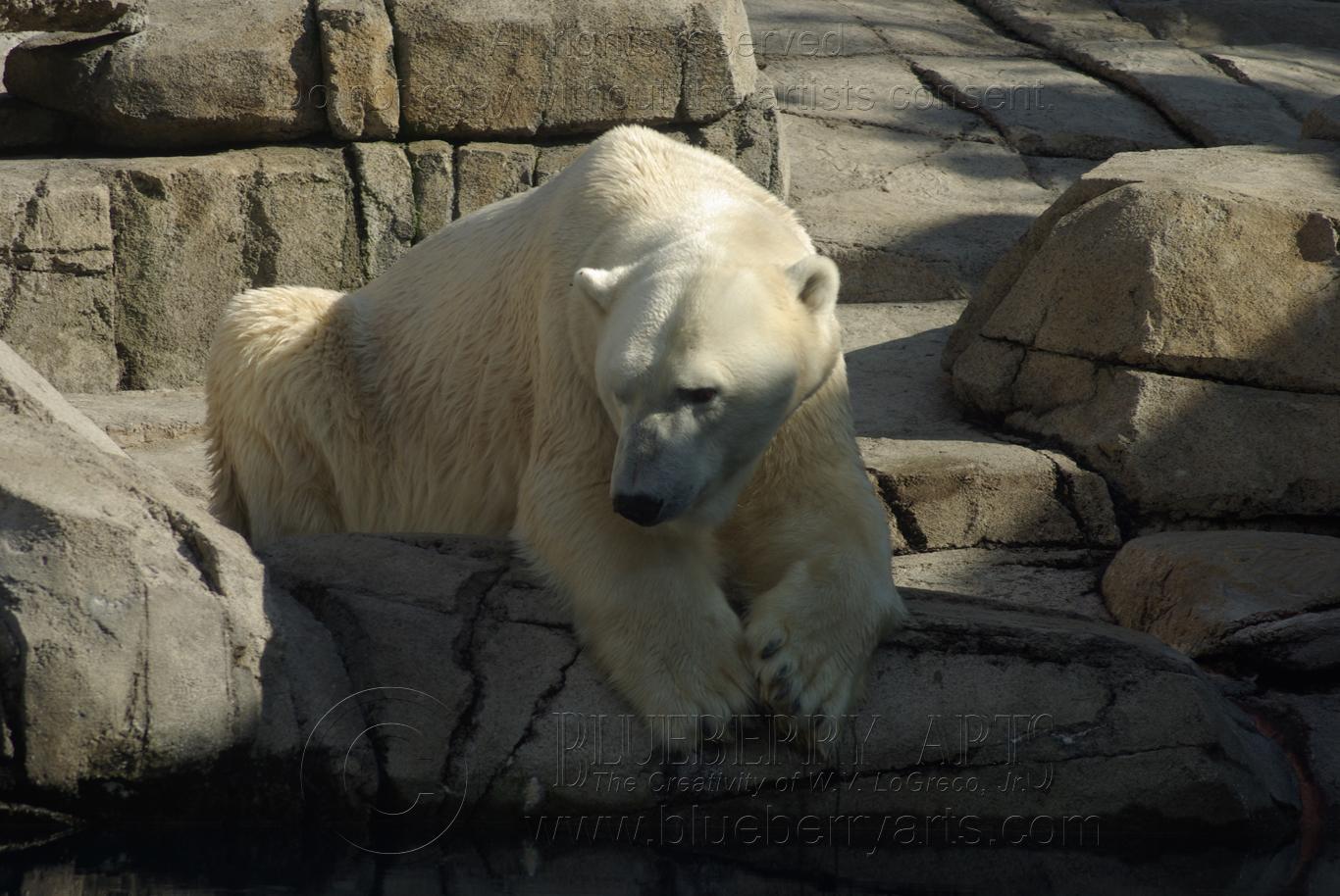 Polar Contemplation
