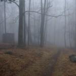 Quiet Wood