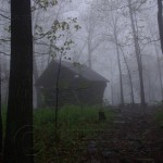 Shelter in the Fog