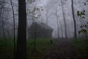 Shelter in the Fog