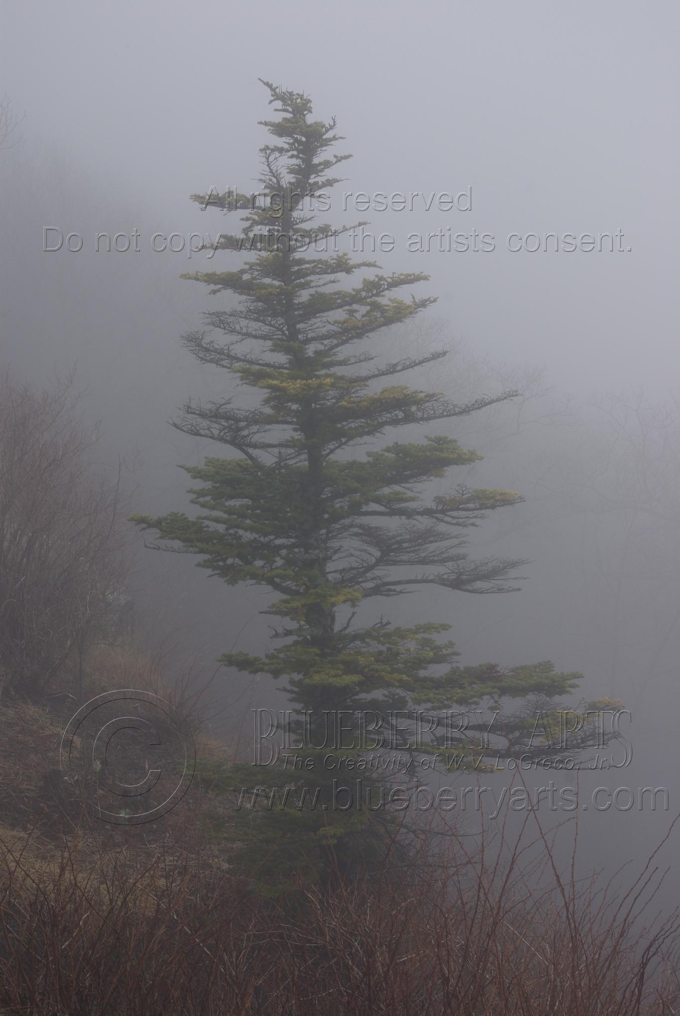 Twisted Mist