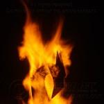 Firebird 2012 54AW