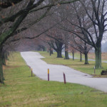 Gray Day in Valley Forge 34AB